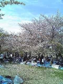 20090412 大阪城公園の葉桜
