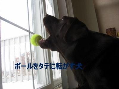 ボール使いもお手のモノ☆