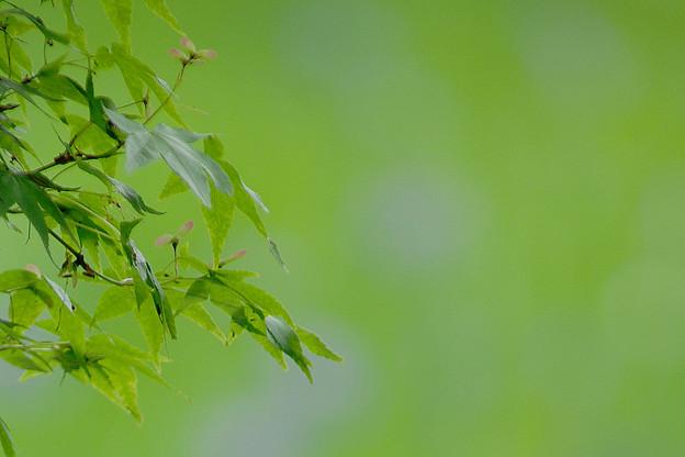 大田の沢 立夏の色