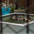 Photos: ueno140413007