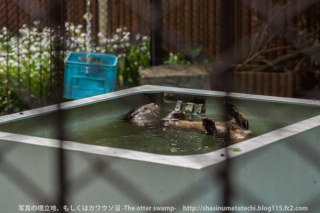 Photos: ueno140413008