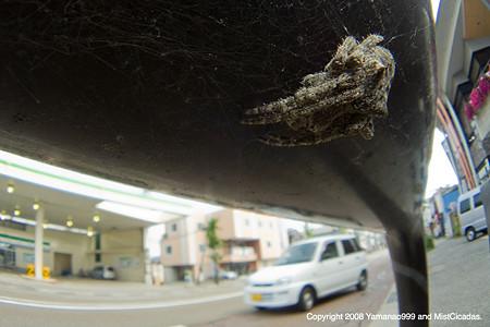 yamanao999_spider_080