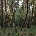写真: 染まる森