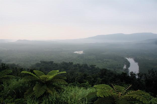 早朝のジャングル。。。