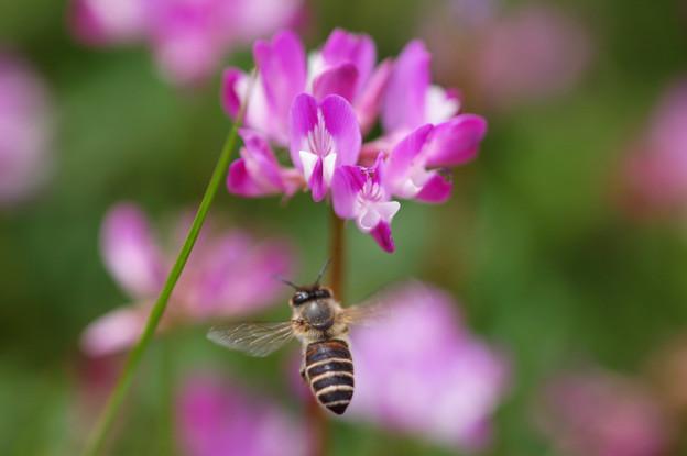 Photos: buzz-buzz