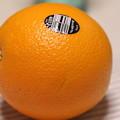 写真: NAVEL ORANGE(ネーブル オレンジ)