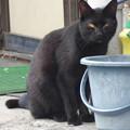 黒猫 2014.4.13