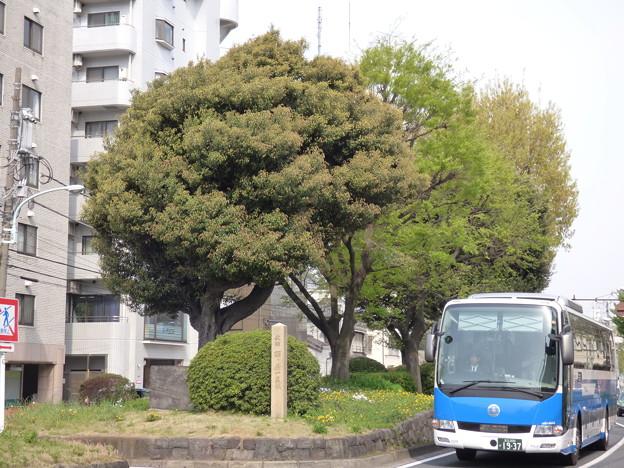 Photos: 西ヶ原一里塚と「青いつばめ」