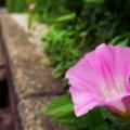 坂道の端で咲く花