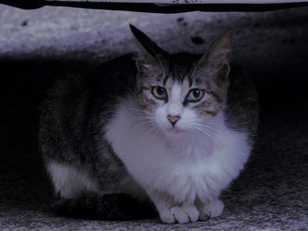 Photos: 早朝の野良猫?