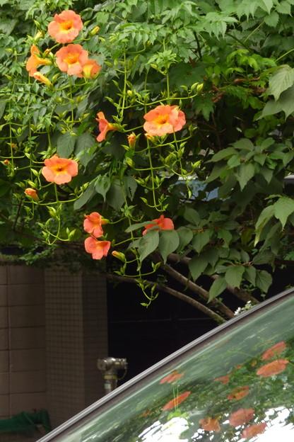 オレンジ色の花