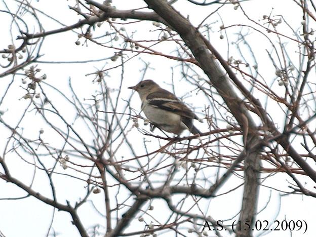 Photos: こ、この鳥は...