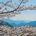 春の富士(1)