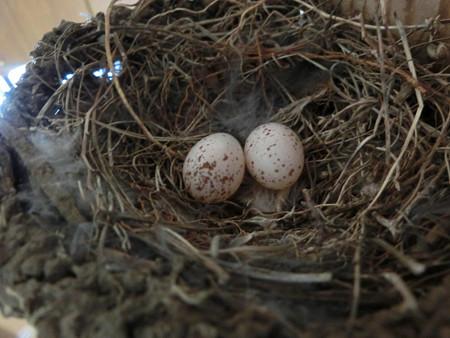 産卵2個目