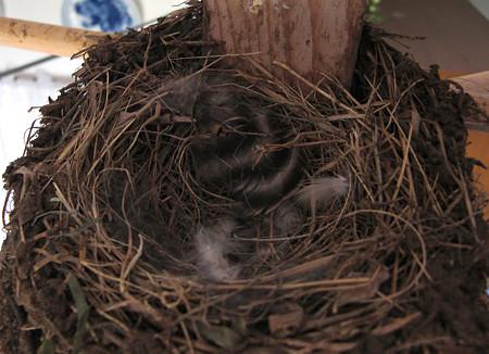 今日の巣の様子
