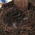 Photos: 今日の巣の様子