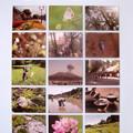 Photos: 鹿児島市生物多様性地域戦略