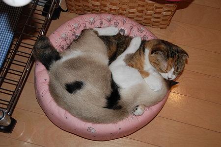 小さいベッドに2匹で入ってます。