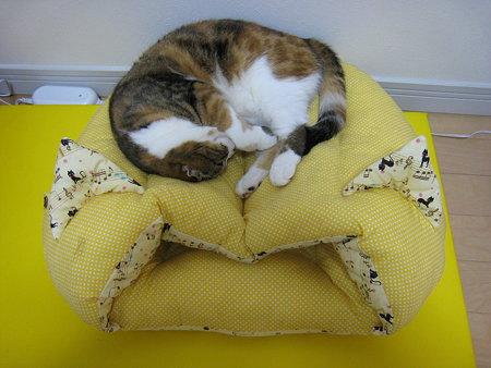 猫耳ベッドの上のモモ