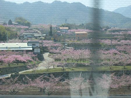 日本一の桃の里へ