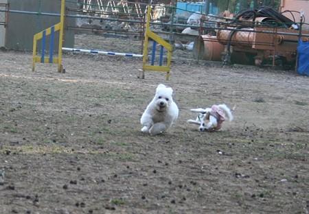 犬も走れば・・・転ぶ!?