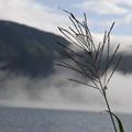 すすきと山と靄と湖