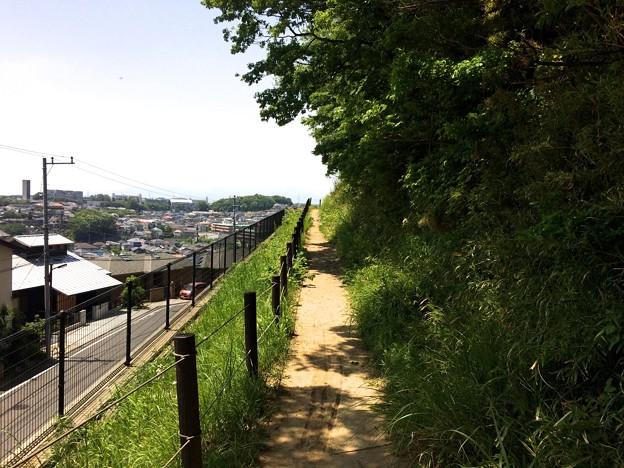 140510 鶴川台尾根緑地