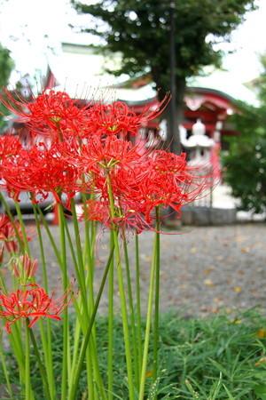 亀ヶ岡八幡宮と彼岸花