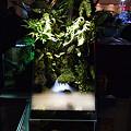 【作品】第26回日本観賞魚フェア 水槽ディスプレイコンテスト 30cm水槽部門 優勝