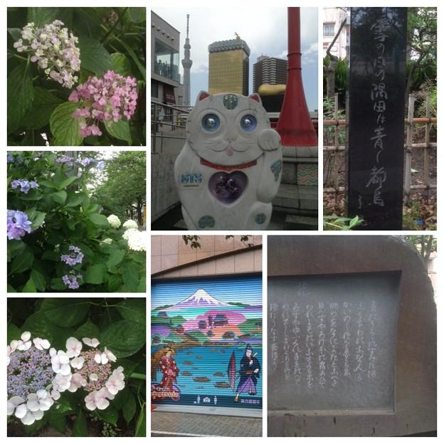 隅田公園 花の歌碑 子規の句碑