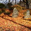 紅葉の絨毯  2010年11月撮影