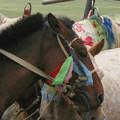 写真: 馬たち