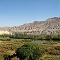 写真: 砂漠のオアシス