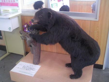 駅が熊に襲われる?!