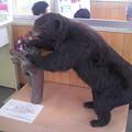 写真: 駅が熊に襲われる?!