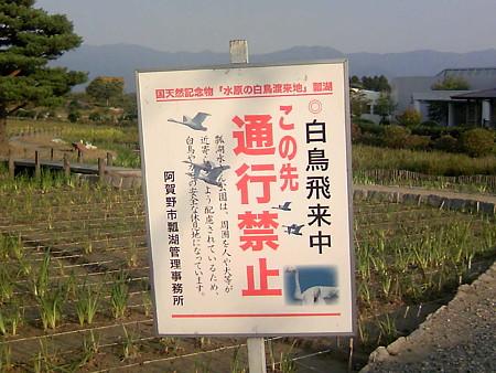瓢湖の奥は立入禁止