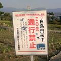 写真: 瓢湖の奥は立入禁止