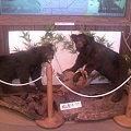 写真: 道の駅あらいに熊が!