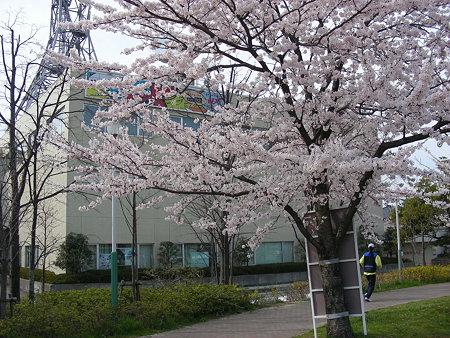 uxtvそばの桜(2)