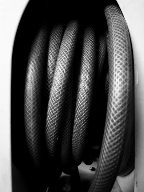 とぐろ巻く大蛇