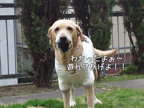 s-myu2008_1209(016)