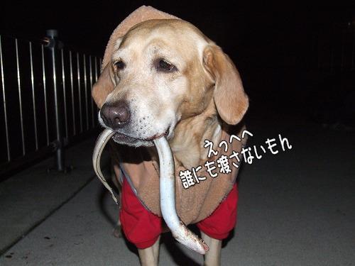 s-myu2008_1212(091)