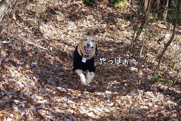 s-myu2009_0221(187)