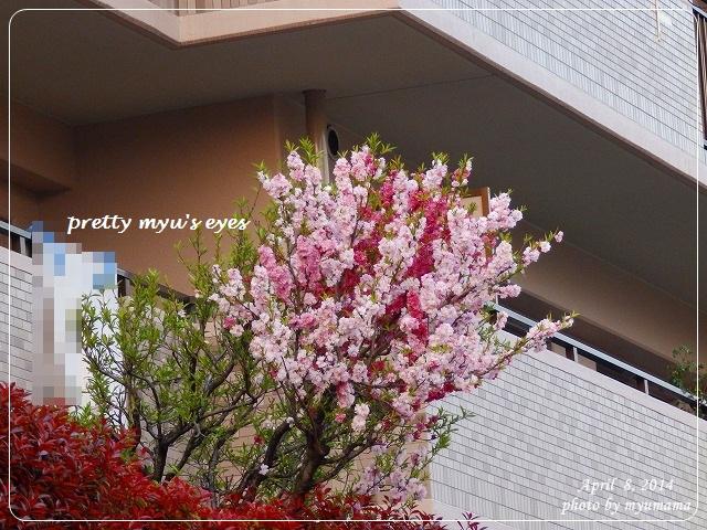 写真: s-022