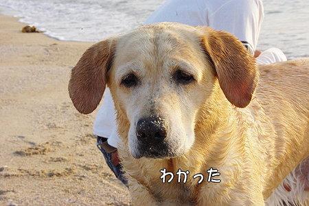 s-myu2009_0430(150)