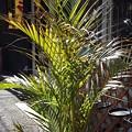 Photos: 植木鉢