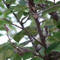 写真: この鳥さんの名前教えて下さい♪2