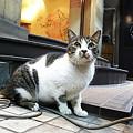 Photos: 夜街の丸猫