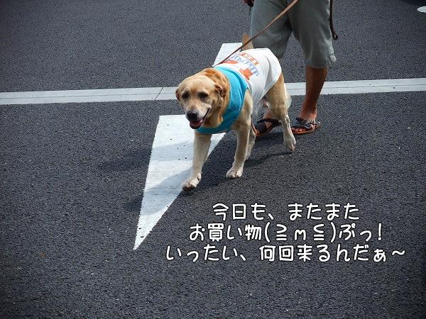 s-2008_0816myu0001