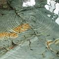 写真: 赤倉温泉あべ旅館岩風呂下から湯が
